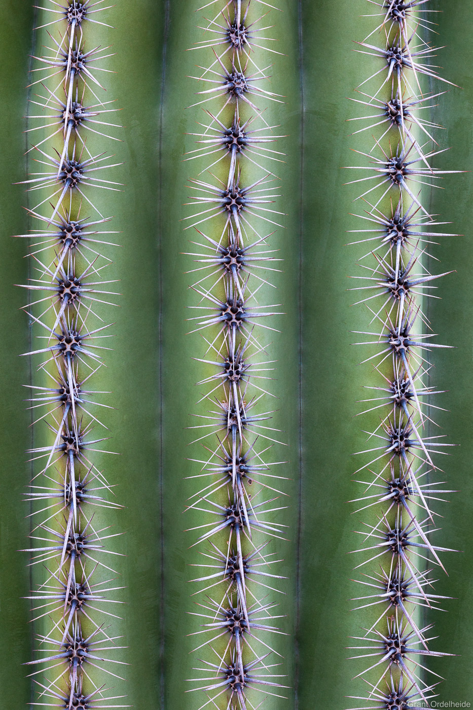 saguaro, spines, tuscan, arizona, details, cactus, catalina, state, park, photo