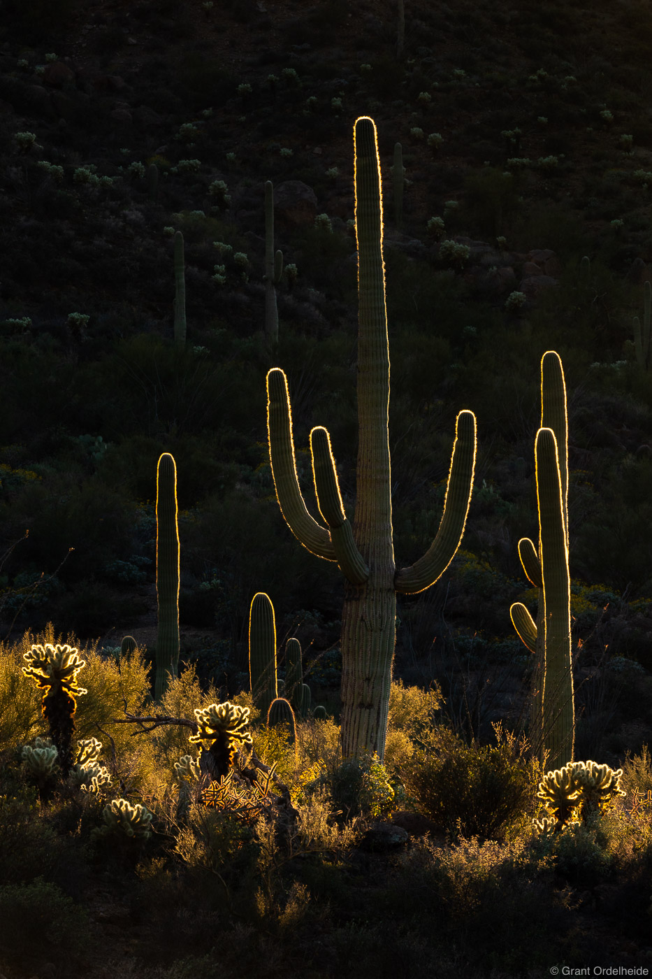 saguaros, tuscon, arizona, backlit, cacti, mountain, park,, photo