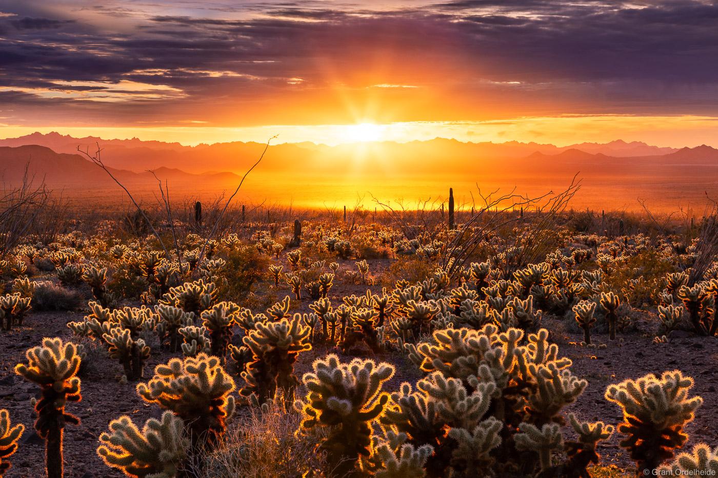 Sunset over a cholla cactus garden in Arizona's Kofa National Wildlife Refuge.