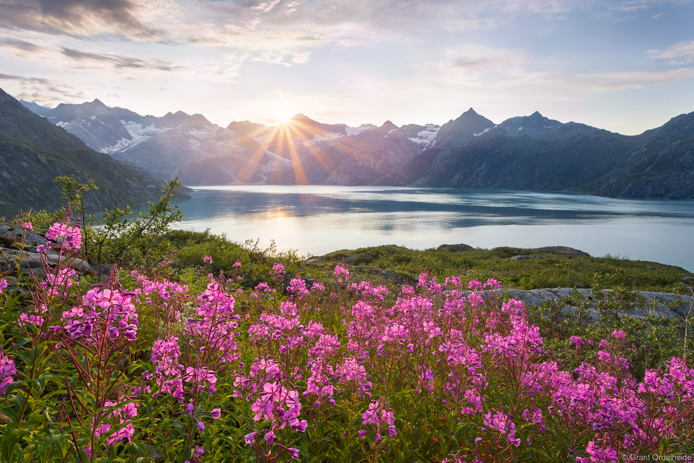 glacier, bay, national, park, wildflowers, alaska, sunset, west arm, southeast,