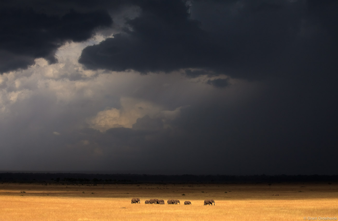A herd of elephants make their way across the Mara as a torrential rain storm bears down upon them.
