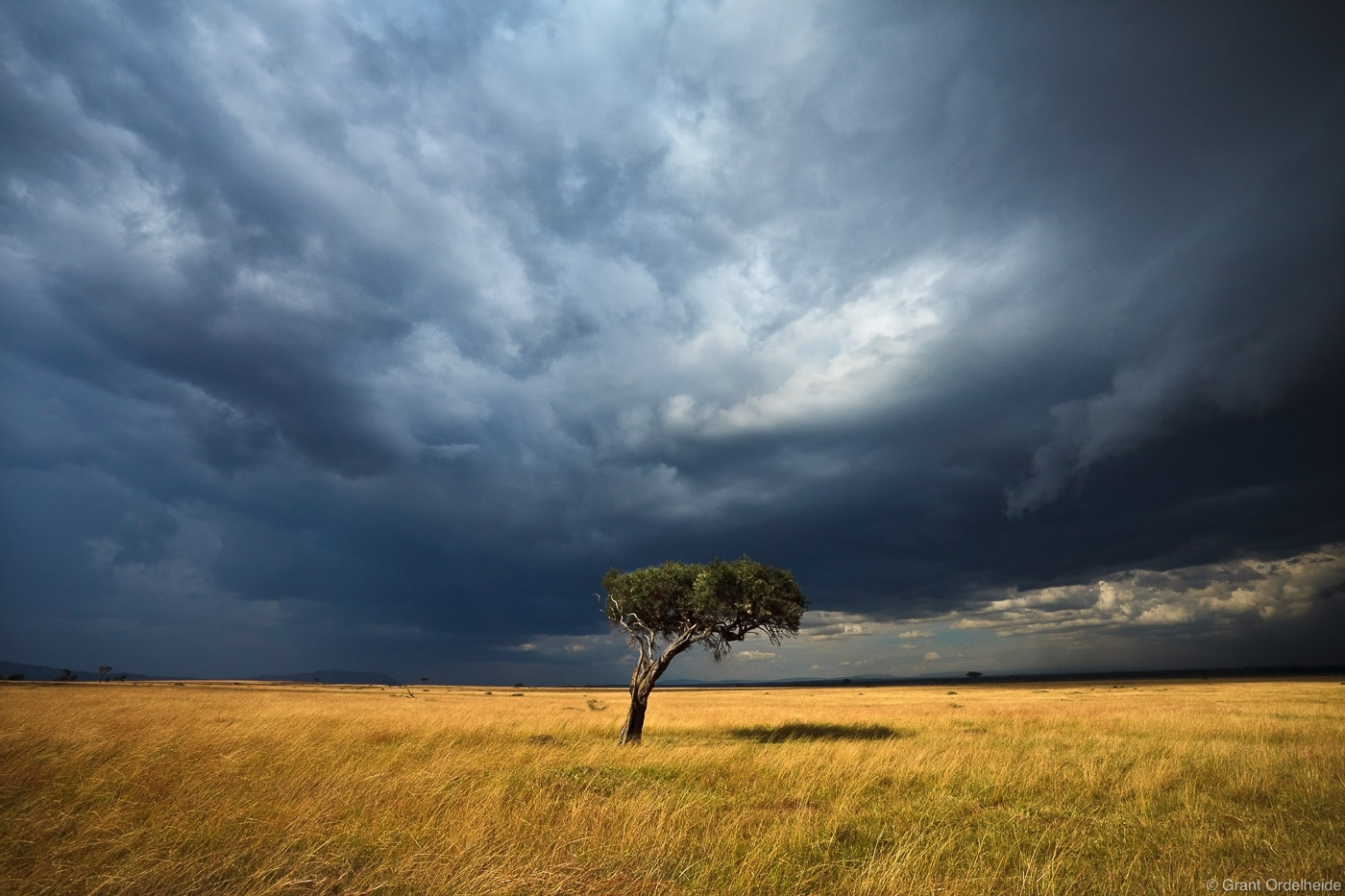 A lone acacia tree below an impending storm in Kenya's Masai Mara.