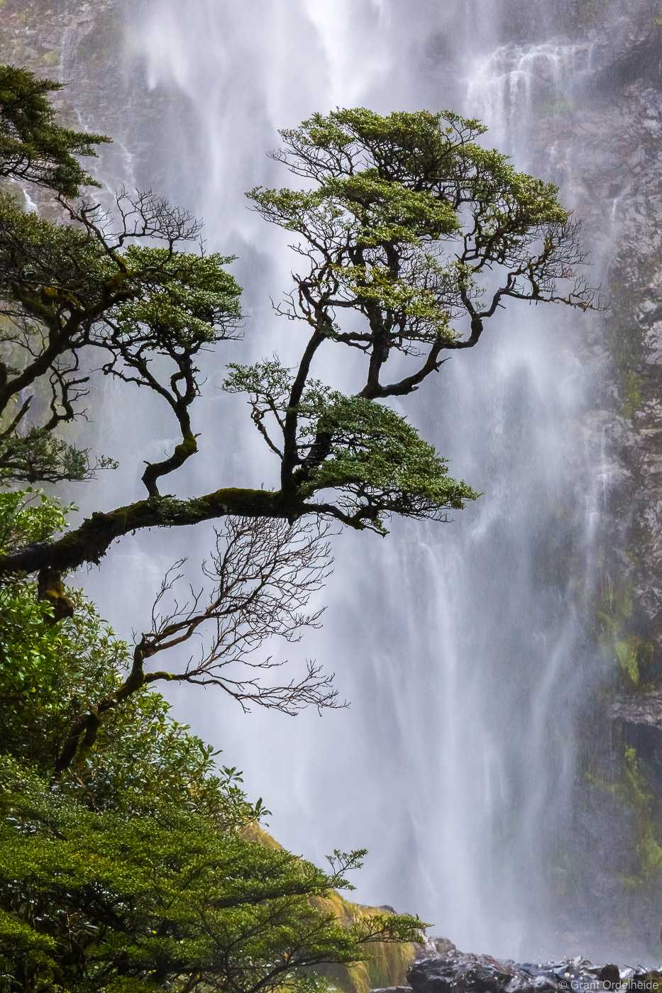 A lone tree in front of Devils Punchbowl falls at Arthur's Pass on New Zealand's South Island.